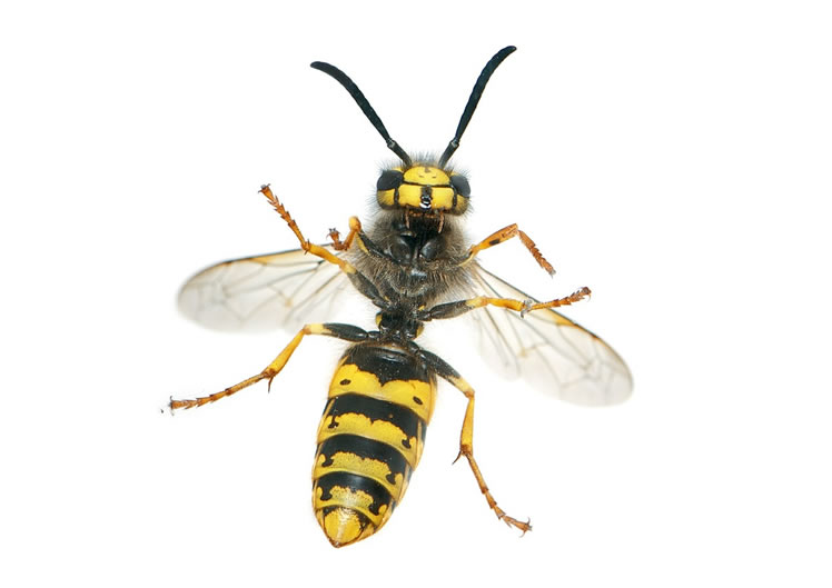 Wasp Control Poynton 24/7, same day service, fixed price no extra!